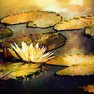On Golden Pond by Darlene Lankford Honeycutt