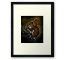 Red Squirrel - Photoshop Manipulation Framed Print