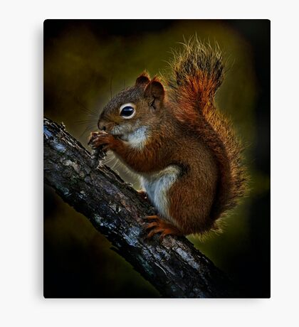 Red Squirrel - Photoshop Manipulation Canvas Print
