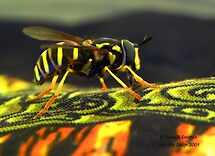 Hoverfly by rocamiadesign