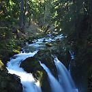 Sol Duc Falls; Winter Light by Amy Hale