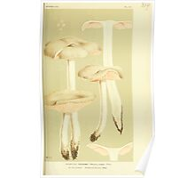 Illustrations of British Fungi by Mordecai Cubitt Cook 1891 V3 0127 AGARICUS  ENTOLOMA  PRUNULOIDES Poster