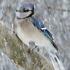 """""""Riding Out The Winter Storm"""" by Gail Jones"""