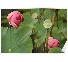 Lotus Flower Water Palace Poster