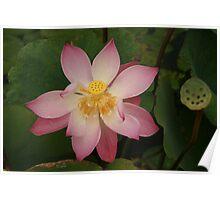 Open Lotus Water Palace Poster