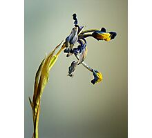 Dried Flower Photographic Print