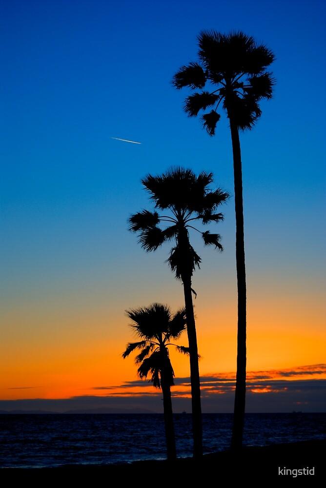 3 Palms...  by kingstid