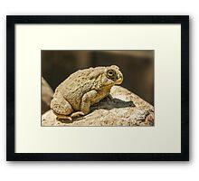 Big Toad 2 Framed Print