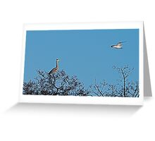 Sod Off Seagull!! Greeting Card