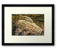 Toad and Rough Rock Framed Print