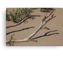Deadwood on the Beach Canvas Print