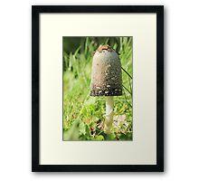Majestic Mushroom Framed Print