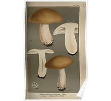 Illustrations of British Fungi by Mordecai Cubitt Cook 1891 V7 0239 RUSSULA  COMPACTAE  MUSTELINA Poster