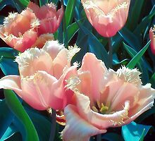 Frilly Tulips by MidgeACE