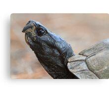 Tortoise Profile Metal Print