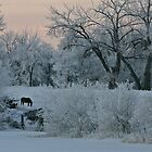 Black Horse at Dawn by Ken McElroy