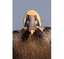Grumpy Pelican Photographic Print