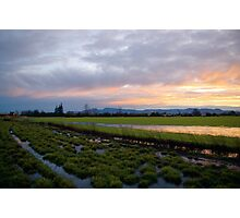 the view from here... pastoral Oregon #3 Photographic Print