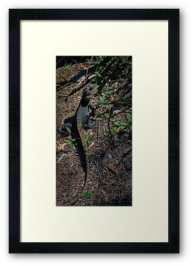 Gippsland Water Dragon. by salsbells69