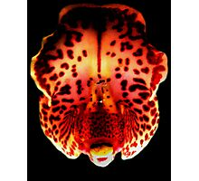 Carnival - A New Perspective on Orchid Life Photographic Print