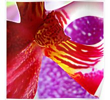 Hearts on Fire - A New Perspective on Orchid Life Poster