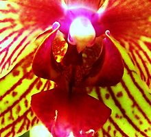 Fiery Desire for Flight - A New Perspective on Orchid Life by ©Ashley Edmonds Cooke