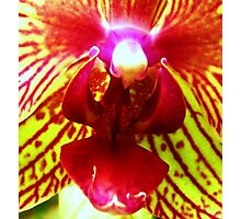 Fiery Desire for Flight - A New Perspective on Orchid Life Photographic Print