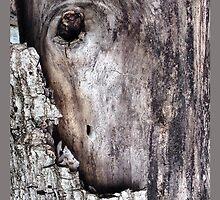 wood cortex by AdriZarate