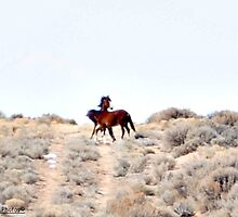 """Wild mustangs """"playing"""" i guess you could say. by Ronda Basteyns"""