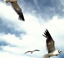the sea gulls by thekkeffect