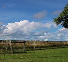 Vineyard by Sherrianne Talon