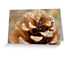 Winter Pine Cone (Natural color) Greeting Card