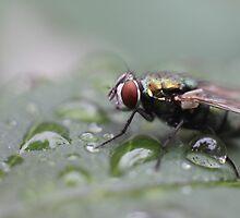 Fly Drops by yolanda