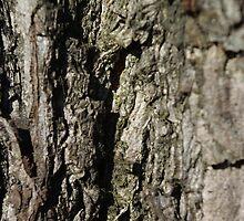 Cortex in Natural by Lorraine Bratis
