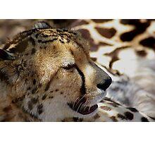 Cheetah bokeh Photographic Print