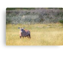 Hornless Oryx Canvas Print