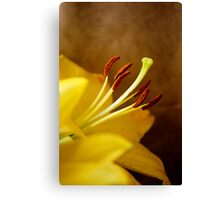 Lily Warming Canvas Print