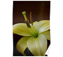 Lily warm and soft. Poster