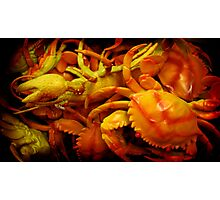 crabs and a lobster Photographic Print