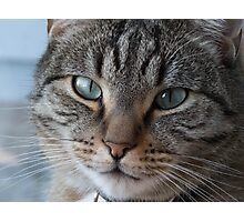 Feline Eyes Photographic Print