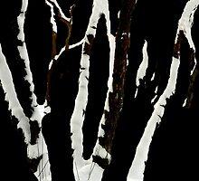 Snowy birches by Bluesrose