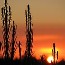 Mount Gambier Summer Sunset by Robert Jenner
