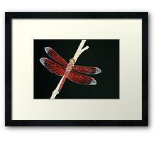Red dragon Framed Print