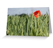 Poppy amongst the wheat Greeting Card