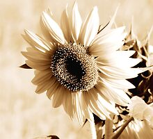 sunflower by thula
