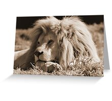 male white lion Greeting Card