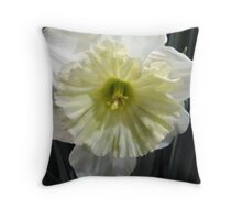 Ice Follies Daffodil Throw Pillow
