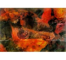 Orange koi dreams with lilies Photographic Print