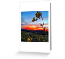 Goodnight Buttercup Greeting Card