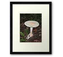 Deadly Amanita Framed Print